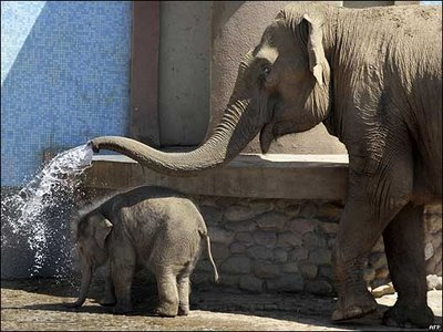 Video elefante joven en zoo