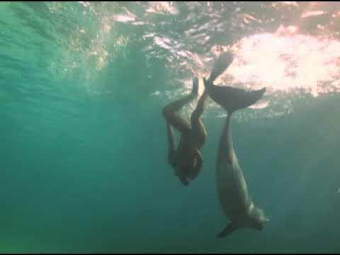 Una mujer y un delfín HD