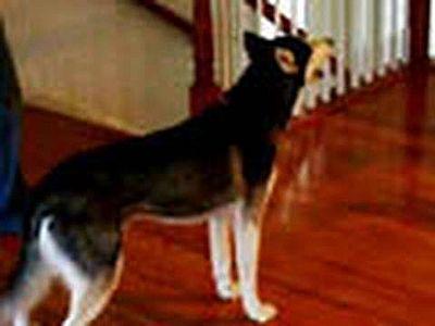 La perra habladora Mishka no es estúpida, no.