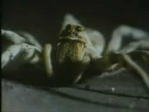 La araña escupidora