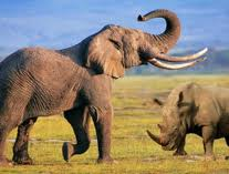 Elefante y rinoceronte, cara a cara