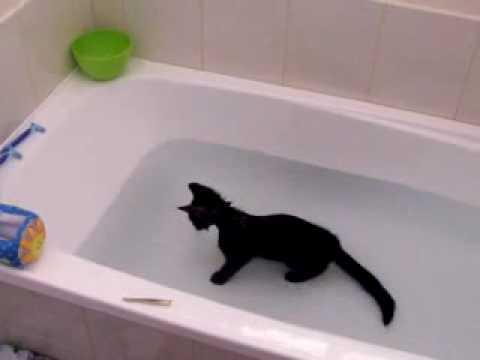 Gato jugando en la bañera