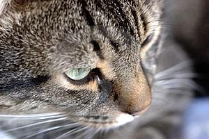 Gato masajea a otro