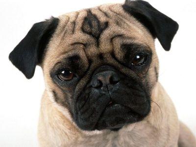 Max, el perro paciente